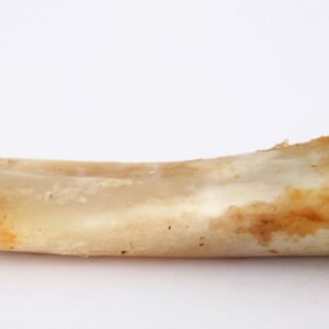 Animal bone with gristle.